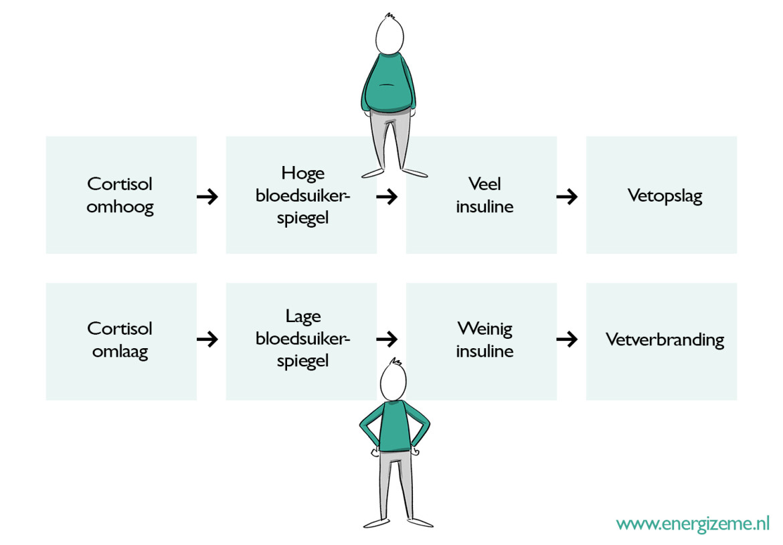 cortisol-vetopslag