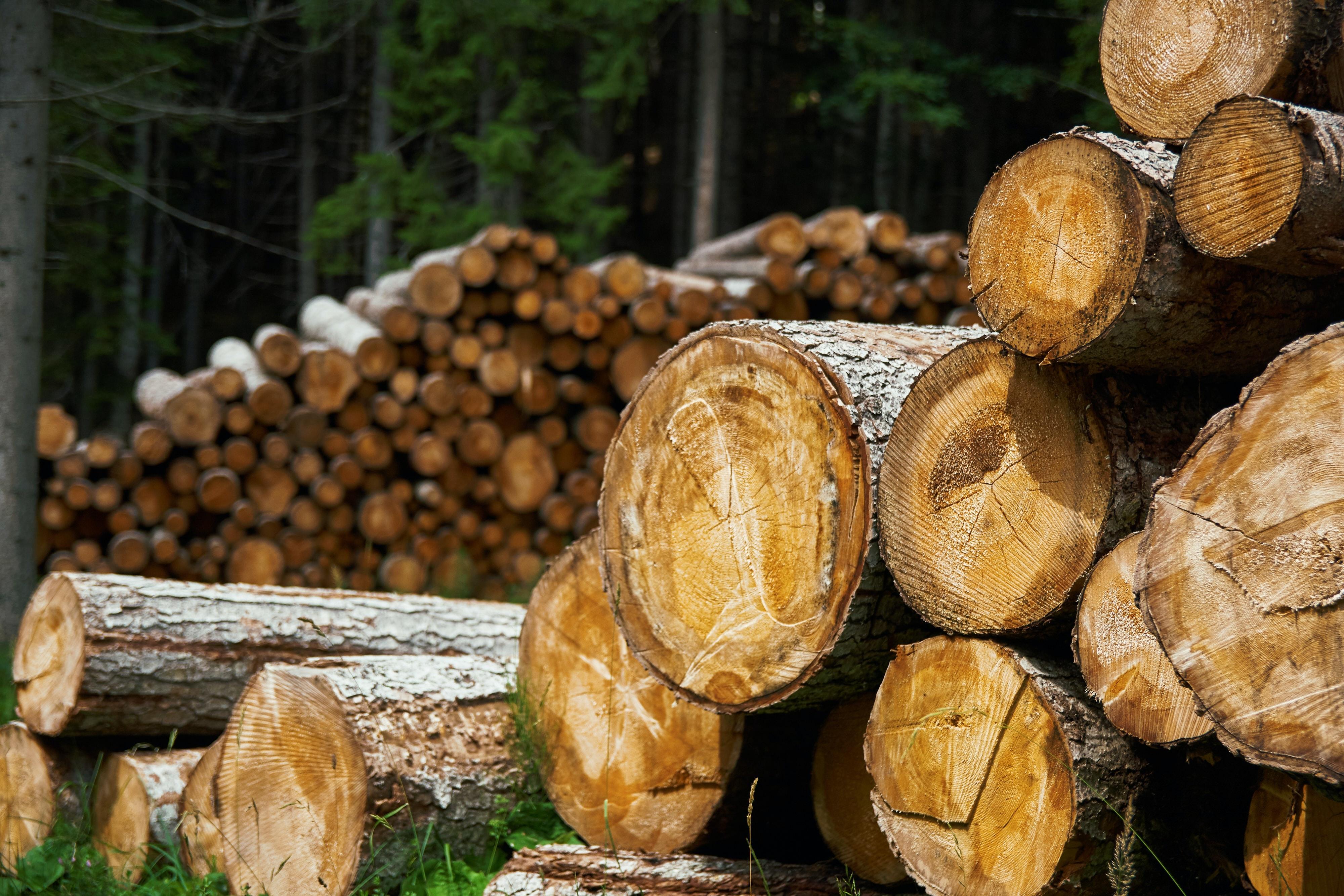 Duurzame bisabolol, zonder boomkap
