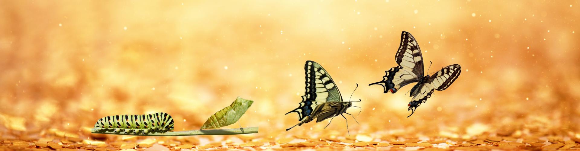 diepgaande transformatie, boost je persoonlijke groei