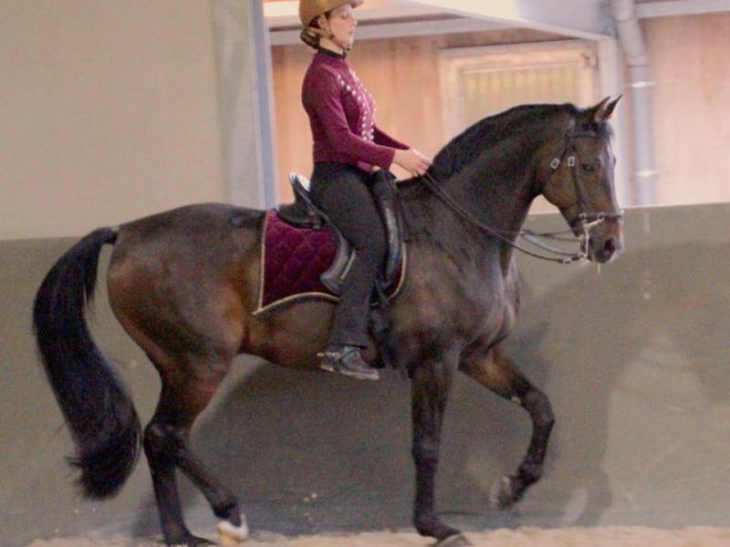 Claudia Wolters rijden klassieke dressuur Equilibrio
