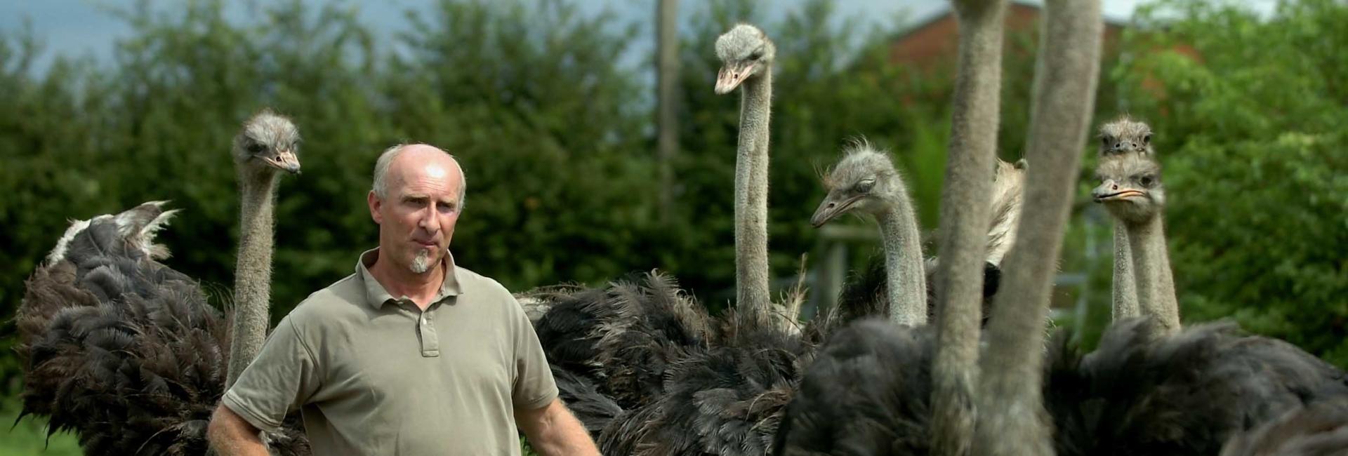 contact ostrich farm world belgium