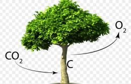 Minder CO2 = meer Bomen project