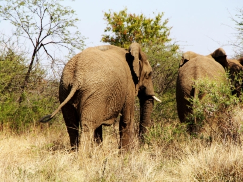 Ngala Game Reserve - Luxe Safari Zuid-Afrika