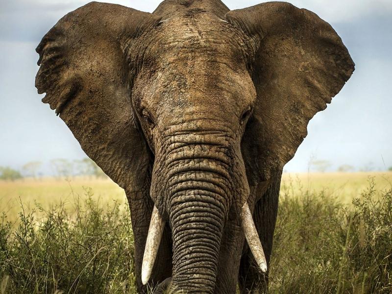 Manyeleti Game Reserve - Luxe Safari in Zuid-Afrika