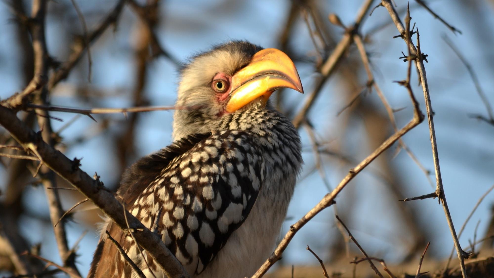 Vogels spotten in Zuid-Afrika - Activiteiten Exclusive Culitravel