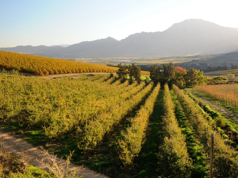Tulbagh - Zuid-Afrika Steden en Dorpen