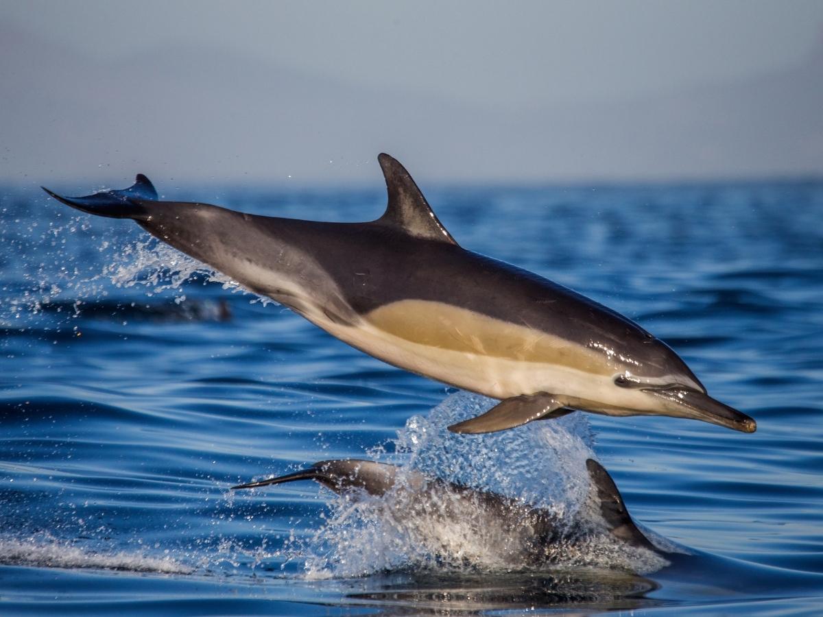 dolphin-coast-durban-south-africa