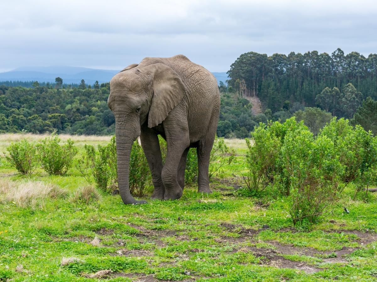 elephant-park-knysna-south-africa