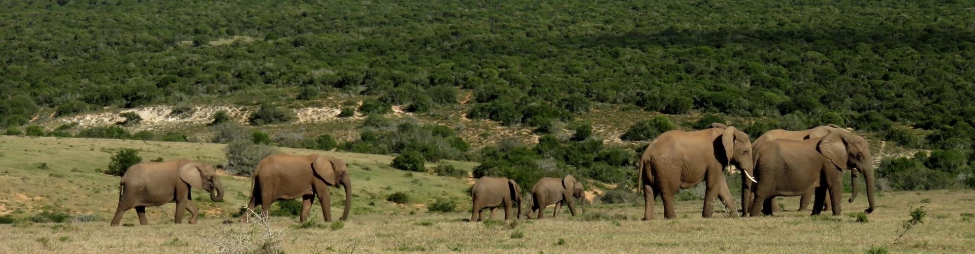 Addo Elephant National Park - Luxe Safari Zuid-Afrika