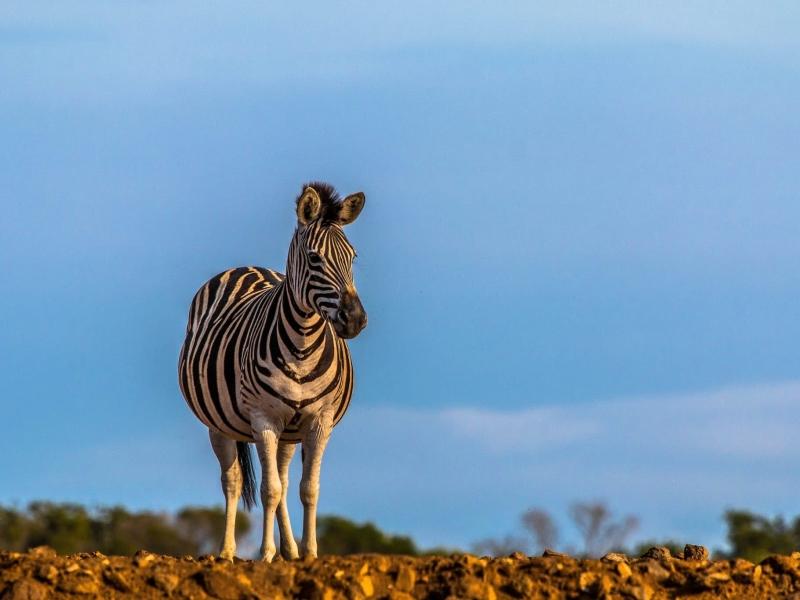 Hluhluwe Umfolozi Game Reserve - Luxe Safari Zuid-Afrika