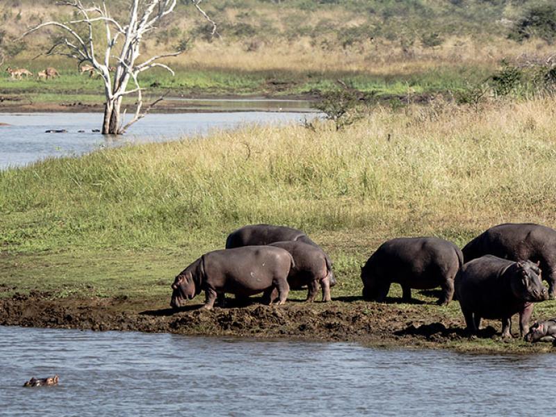 iSimangaliso Wetland Park - Luxe Safari Zuid-Afrika