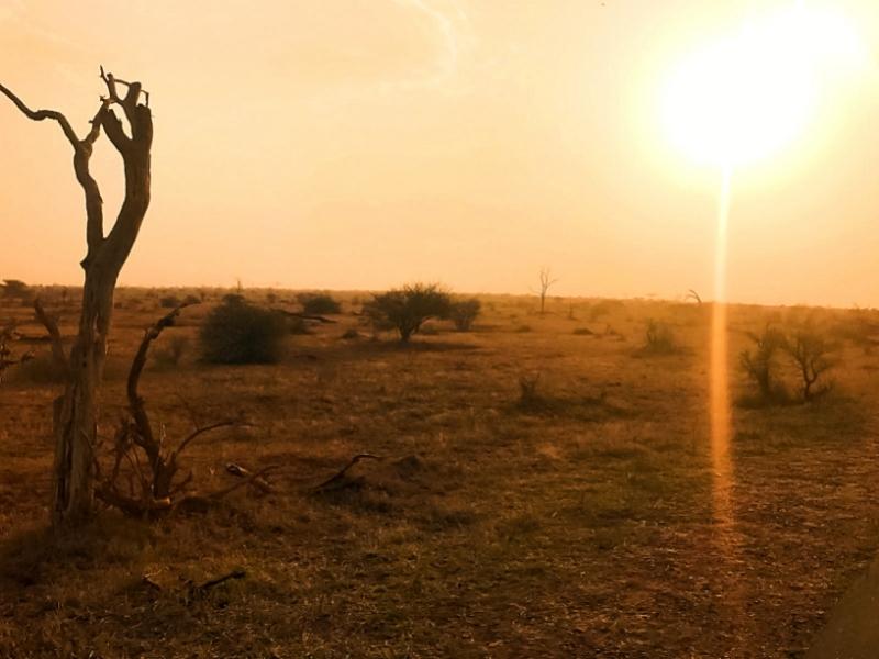 Savannah Kruger National Park - Luxe Safari Zuid-Afrika