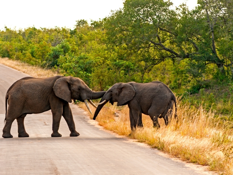 Olifanten Kruger National Park - Luxe Safari Zuid-Afrika