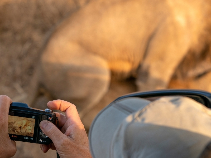 Toerist Kruger National Park - Luxe Safari Zuid-Afrika