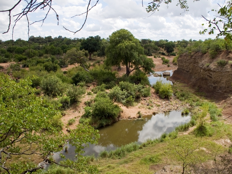 Rivier Kruger National Park - Luxe Safari Zuid-Afrika