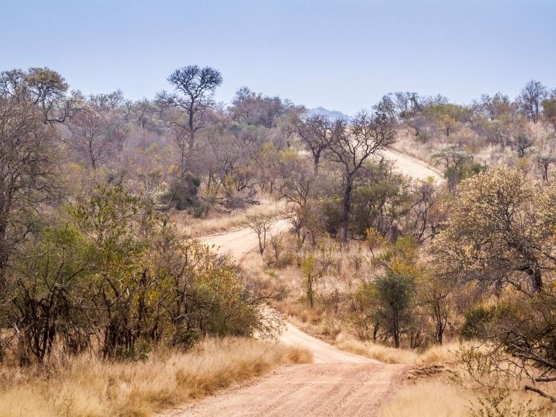 Savanne Road Kruger National Park - Luxe Safari Zuid-Afrika