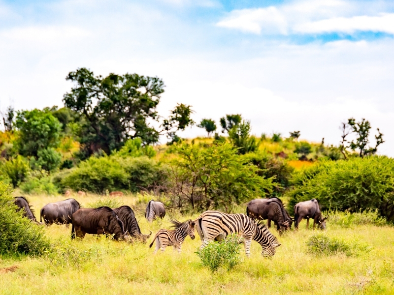 Wilde Dieren Kruger National Park - Luxe Safari Zuid-Afrika
