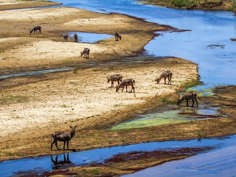 Waterpoel Kruger National Park - Luxe Safari Zuid-Afrika