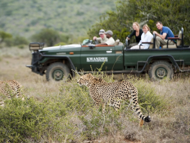Kwandwe Game Reserve - Luxe Safari Zuid-Afrika - Game Drive Cheetahs
