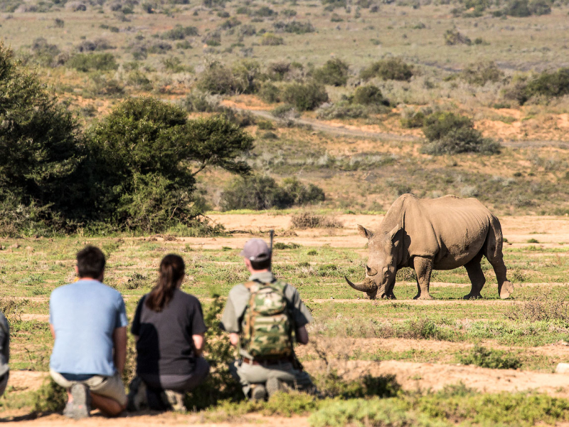 Kwandwe Game Reserve - Luxe Safari Zuid-Afrika - Rhino