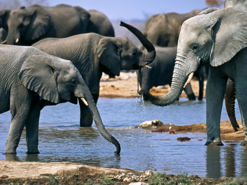 Kwandwe Game Reserve - Luxe Safari Zuid-Afrika - Olifanten