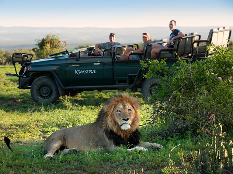 Kwandwe Game Reserve - Luxe Safari Zuid-Afrika - Game Drive Lion