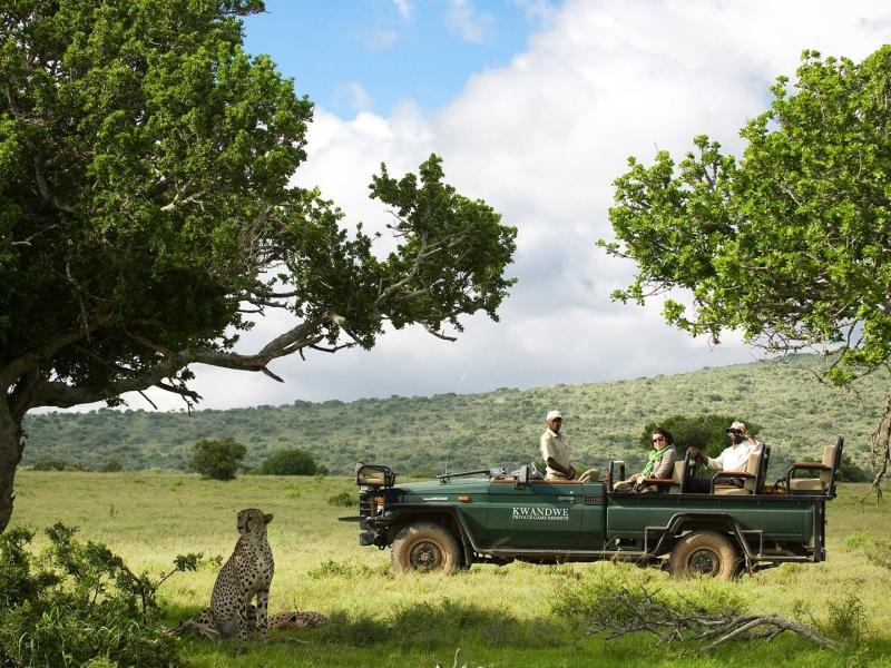 Kwandwe Game Reserve - Luxe Safari Zuid-Afrika - Game Drive Cheetah