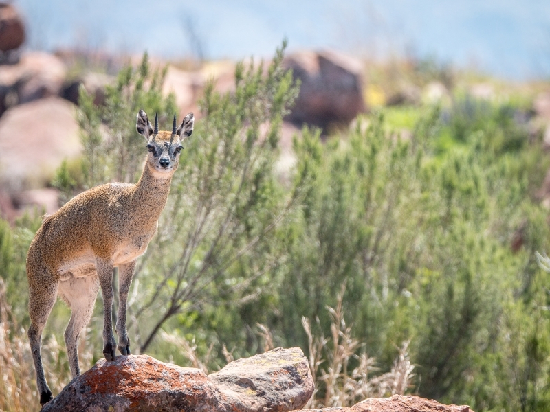 Marakele National Park - Luxe Safari Zuid-Afrika - Wild Animal