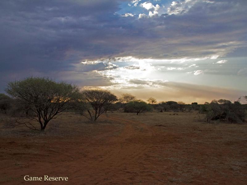 Madikwe Game Reserve - Luxe Safari Zuid-Afrika