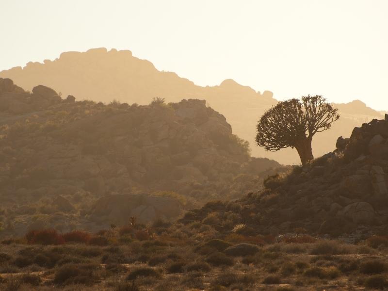 Namaqualand - Provincies en Regio's Zuid-Afrika