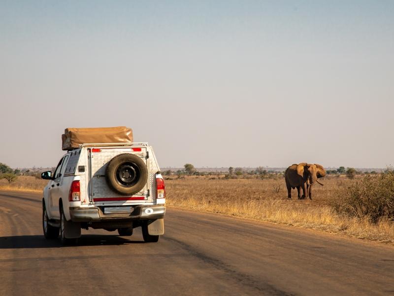safari-olifant-afrika