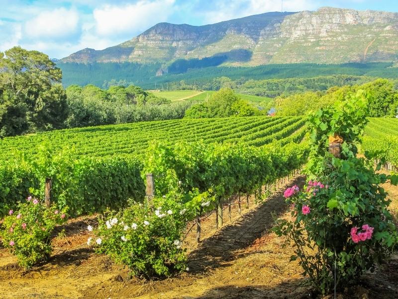 Stellenbosch - Zuid-Afrika Steden en Dorpen