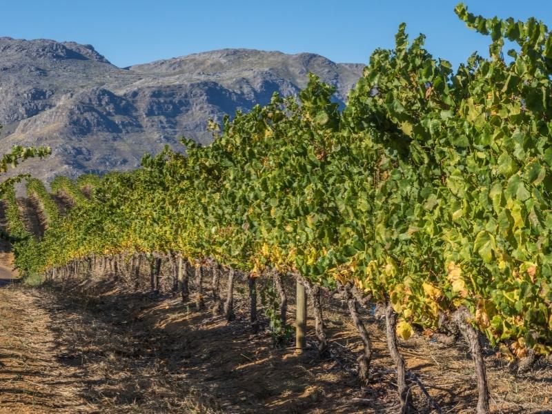 Cape Winelands - Provincies en Regio's Zuid-Afrika