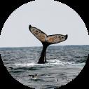 Walvissen spotten - Activiteiten Zuid-Afrika