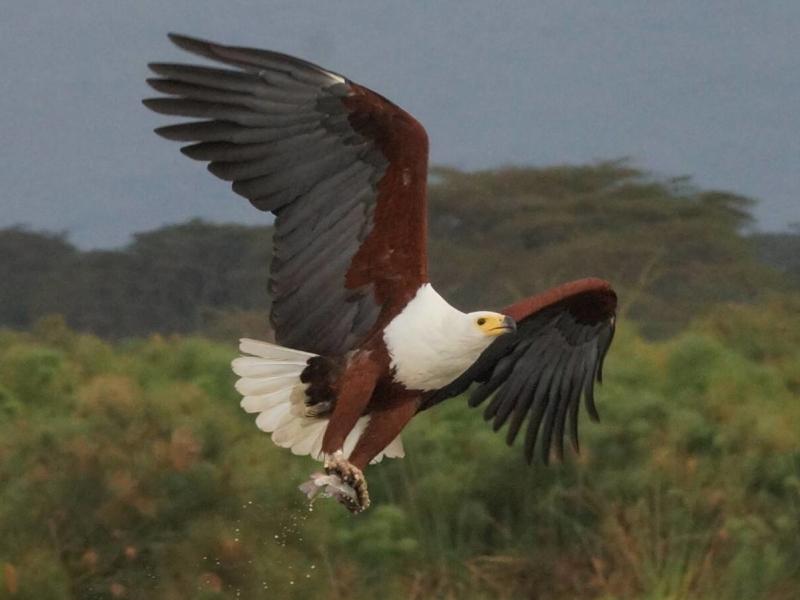 de-hoop-nature-reserve-zuid-afrika-volgels-kijken.jpg