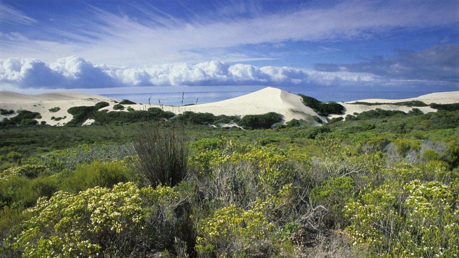 de-hoop-nature-reserve-zuid-afrika-zandduinen-en-fynbos-en-oceaan.jpg