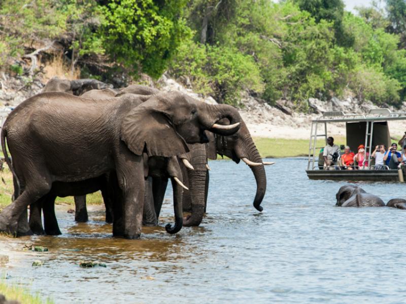 ichingo-chobe-river-lodge-botswana-olifanten