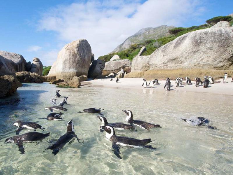 kaapstad-penguins.jpg