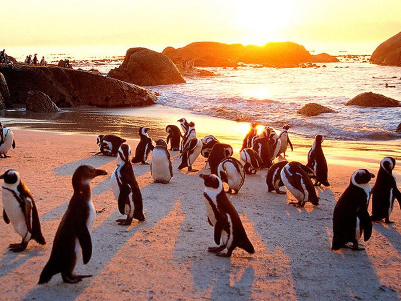 kaapstad-penguins-boulders-beach_2.jpg