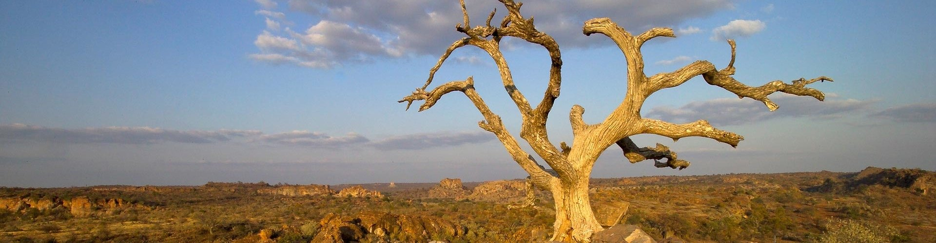 mapungubwe-national-park.jpg