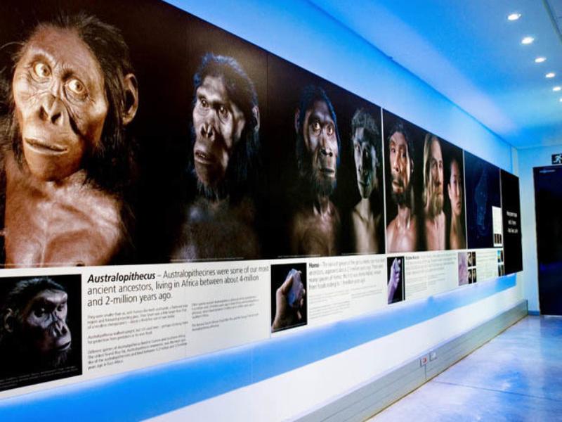 maropeng_visitor_centre_sterkfontein-exhibition.jpg