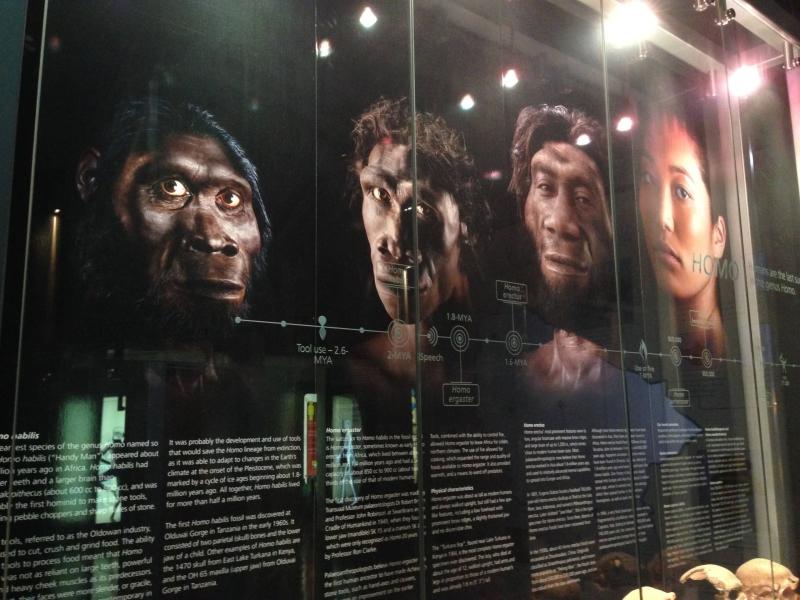 maropeng_visitor_centre_sterkfontein-exhibition_2.jpg