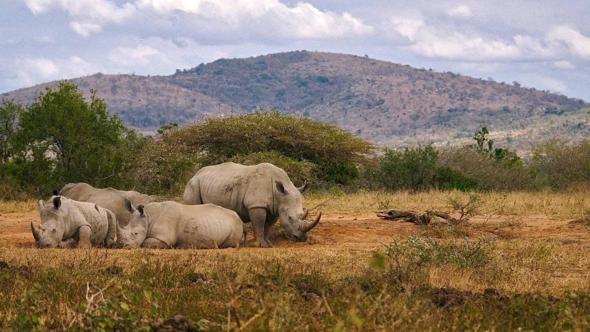 neushoorn-in-de-afrikaanse-bush-safari-zuid-afrika.jpg