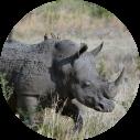 neushoorn-tijdens-safari-zuid-afrika
