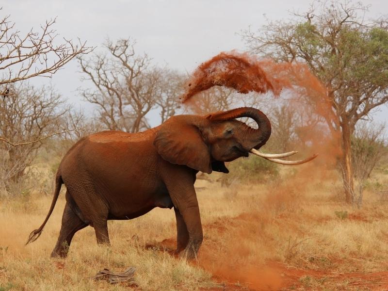 olifant-zuid-afrika