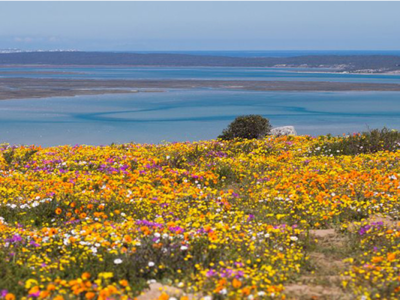 postberg-west-coast-national-park-spring-flowers.jpg