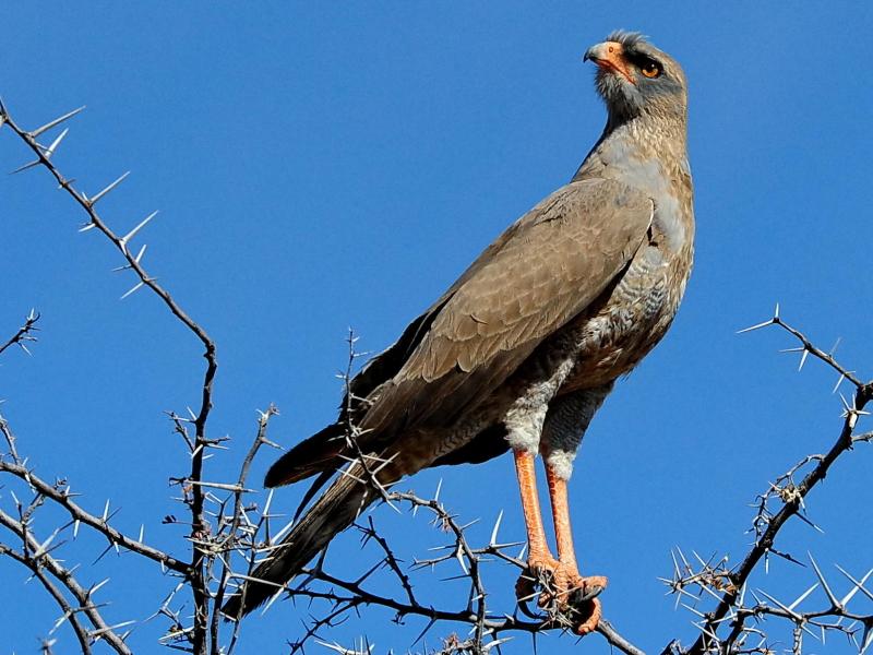 shamwari-birds_16.jpg
