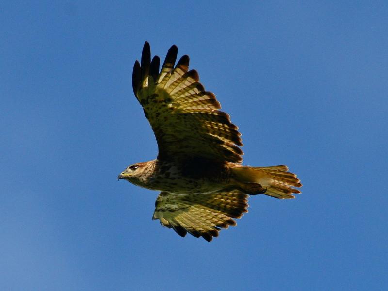 shamwari-birds_24.jpg