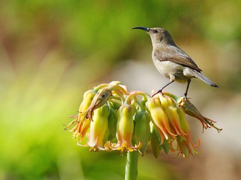 shamwari-birds_26.jpg