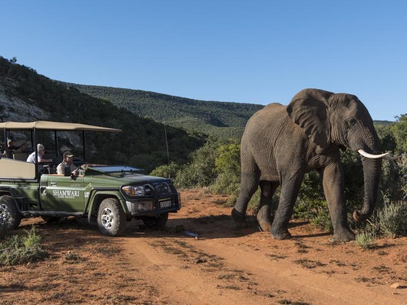 shamwari-game-drive-elephant.jpg